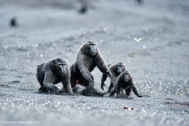 Behaviour- Mammals - Runner-up