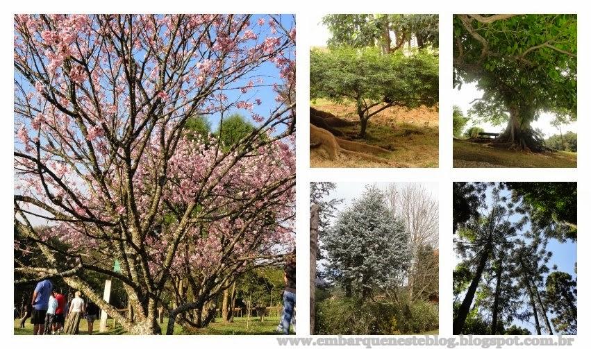 Diversas árvores