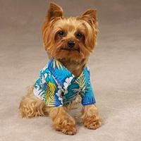 Image from http://www.baxterboo.com/fun/a.cfm/top-picks-for-summer-dog-fashion