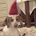 Το ωραιότερο Χριστουγεννιάτικο δώρο για..σκύλους!