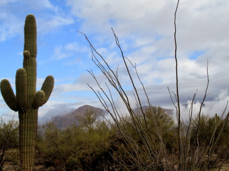 Sonoran Desert in Winter