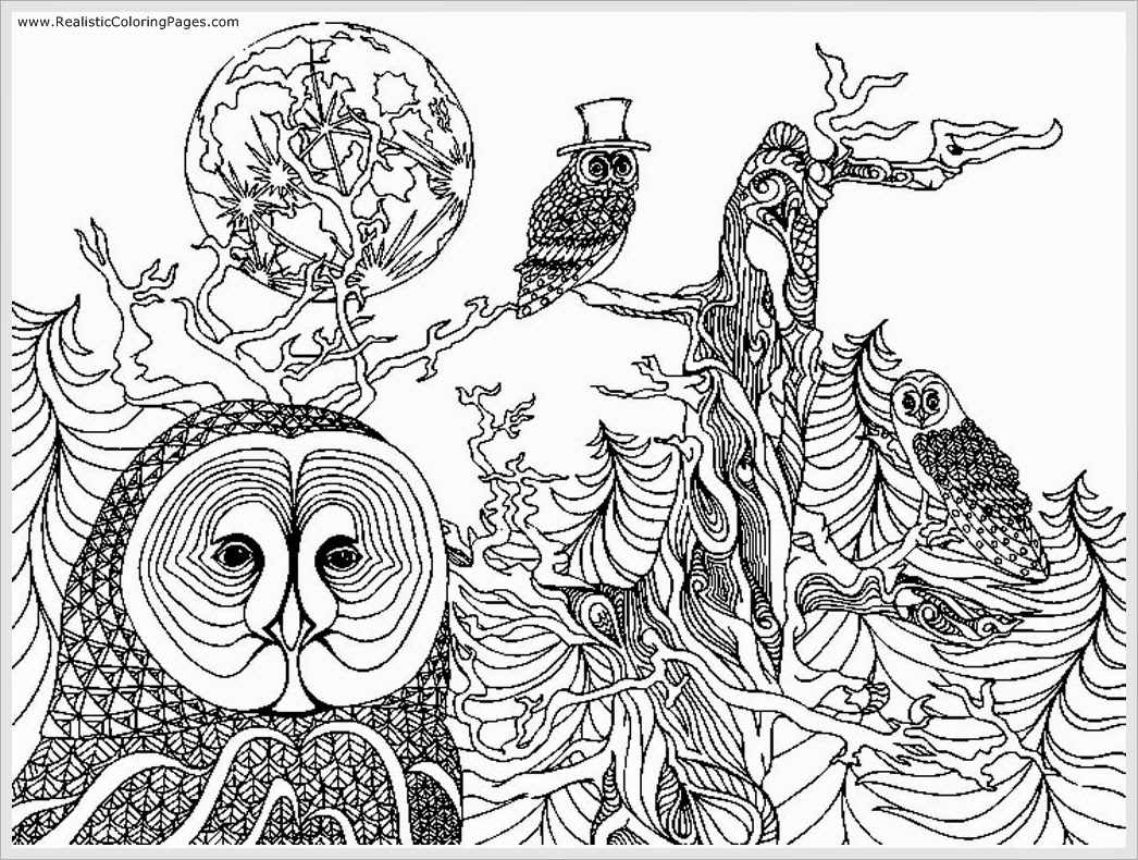 Coloring Pages Adults Owl