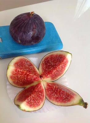 Seed figs Bursa