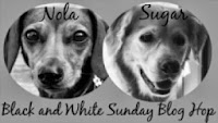 Black and White Sunday Blog Hop Icon