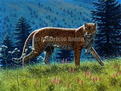 guepardos extintos Miarcinonyx