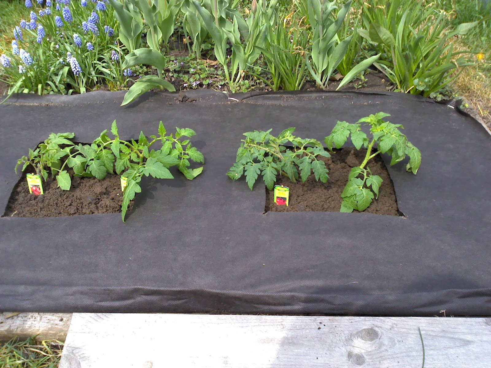 UncommonCoder DIY Garden take 2
