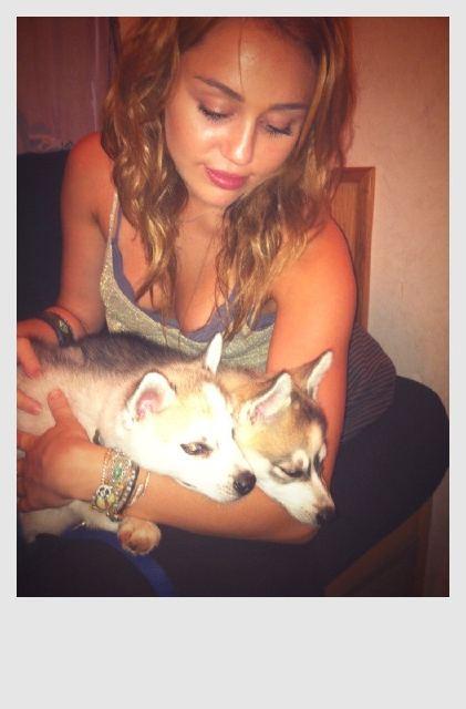 http://3.bp.blogspot.com/-16fuQ3hNkiY/TjeRusOD99I/AAAAAAAAIfg/AyryumfxYlQ/s1600/miley-cyrus-holding-dogs.jpg