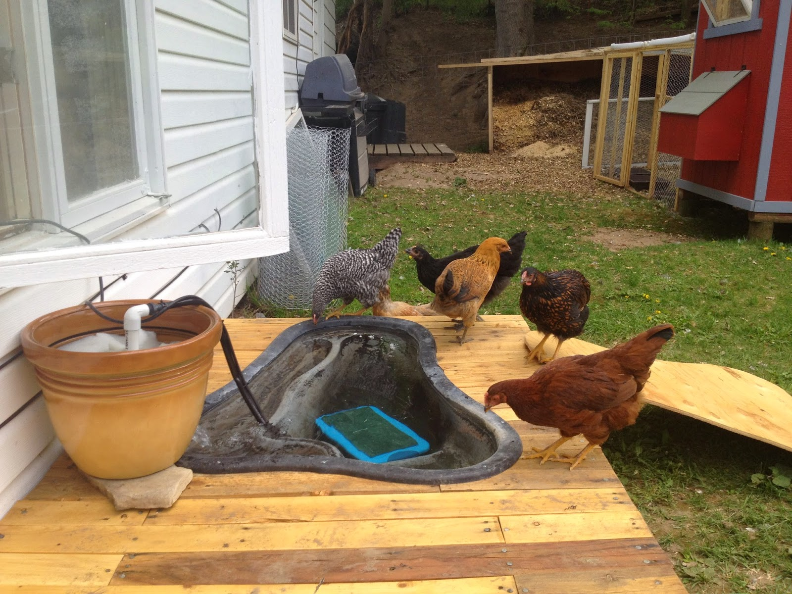 the official poultrybookstore com blog coop tours