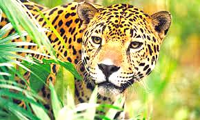 CURSO: FAUNA DE VENEZUELA Y LEY DE PROTECCIÓN DE LA FAUNA SILVESTRE