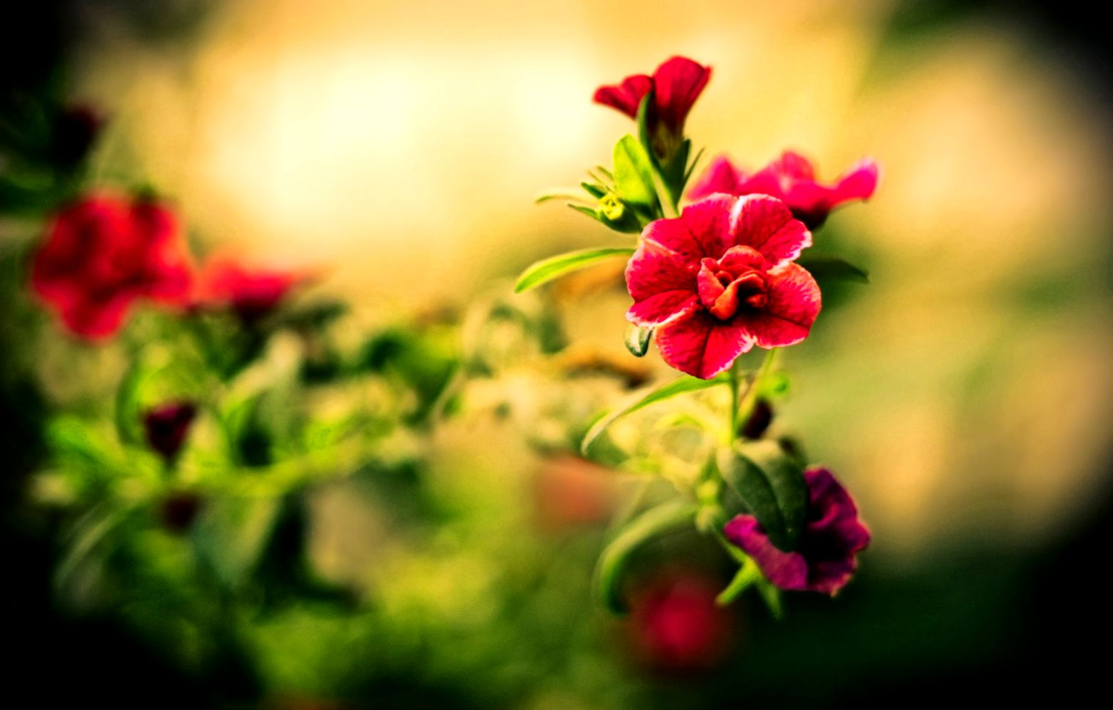 Beautiful Flowers Wallpapers For Desktop HD Group 78