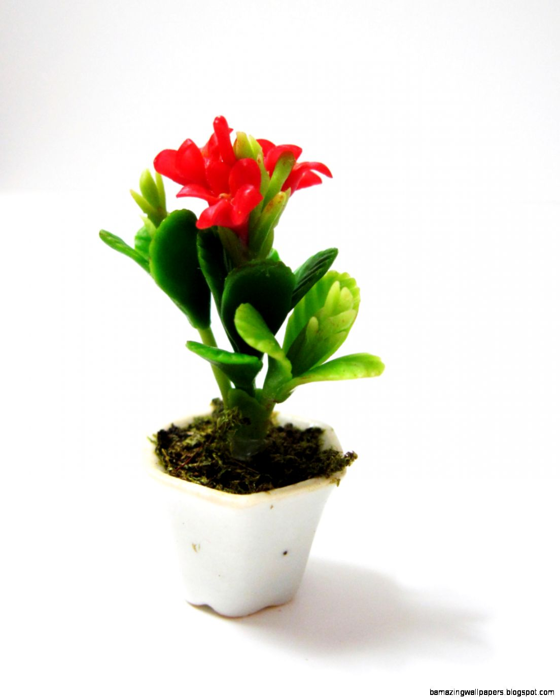 Miniature Red Plumeria Potted Plant Flower Fairy by DoodleBirdie
