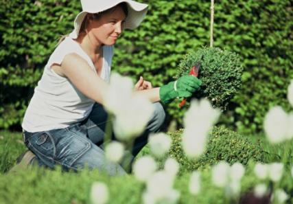 jardiner a paisajismo verano cuidados del jardin