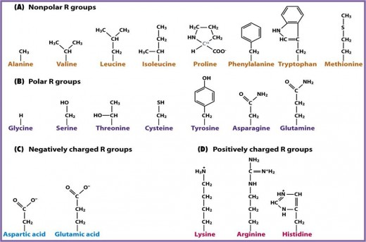 Classification of amino acids