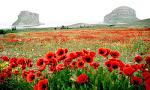 Natural Beauties of Iran