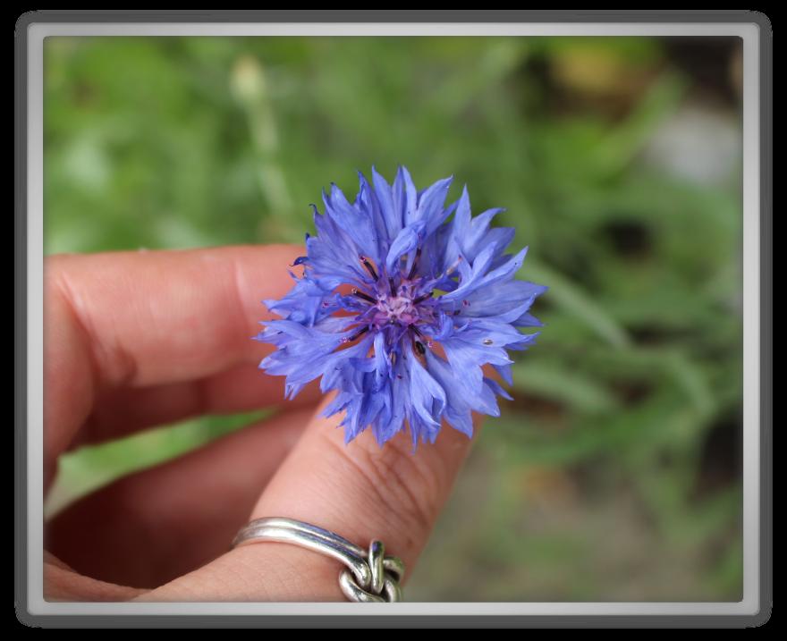 Marjolein Kucmer gardening haul story update sick ill cornflower flowers blue yesstyle shopping risen 3 gaming silver sterling ring nature organic Memebox, 미미박스, Pumpkin, YesAsia, Yestyle, Tara, Updates, Story,