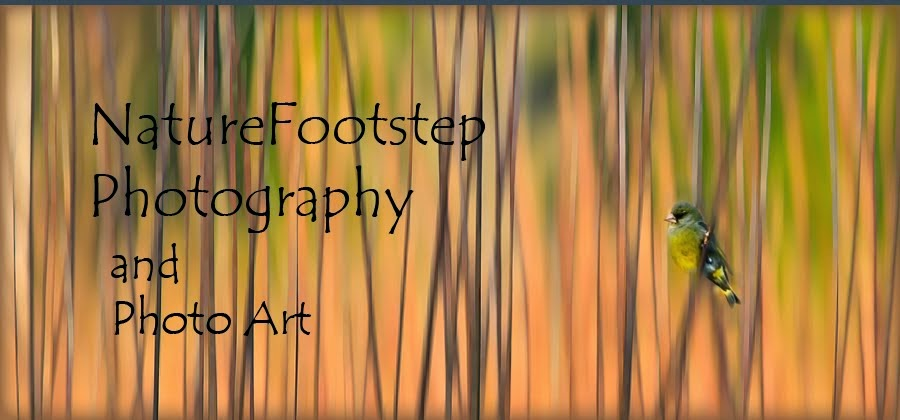 NatureFootstep Photography 2