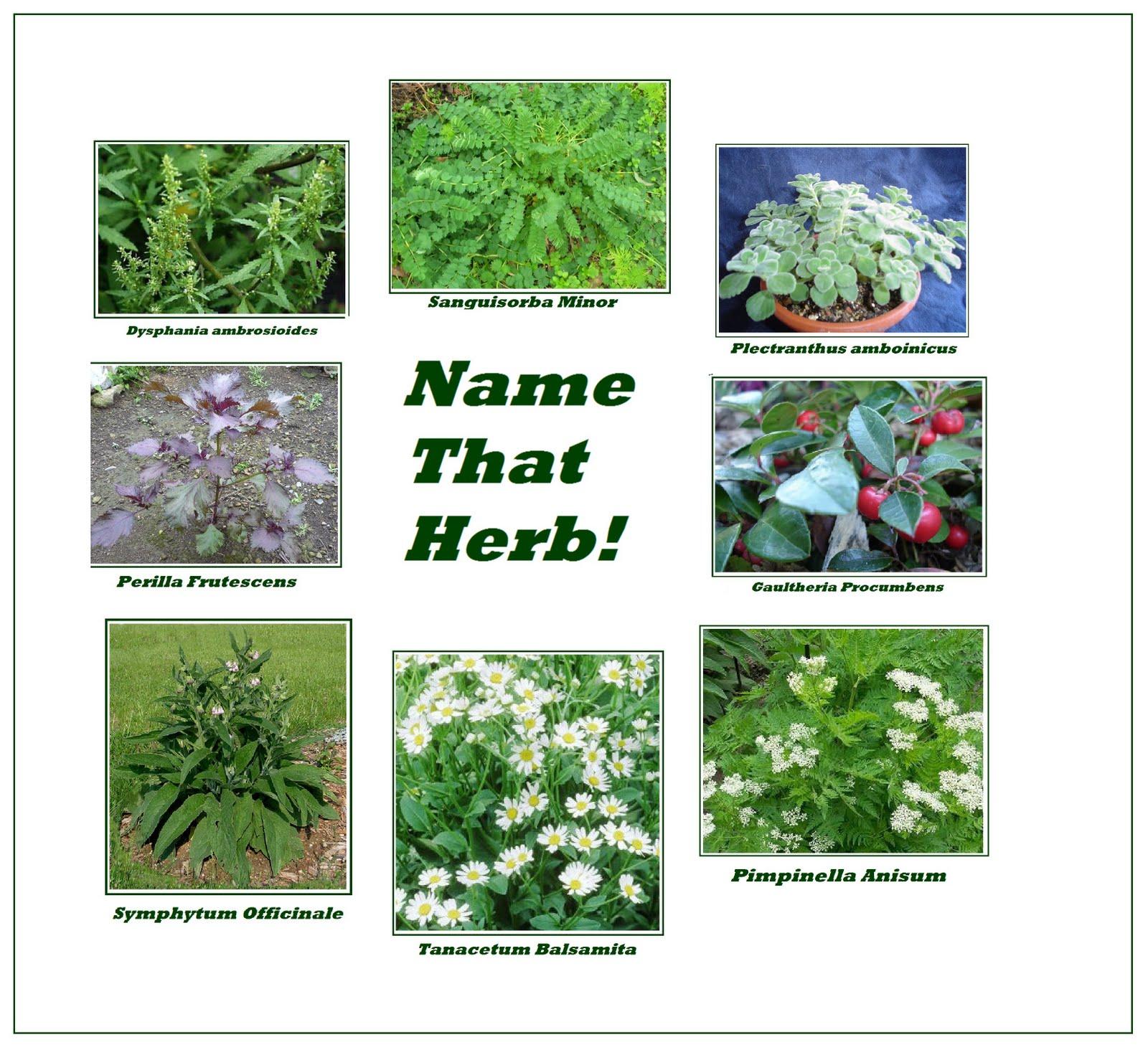 Identify Fresh Herbs I gave them each a blank
