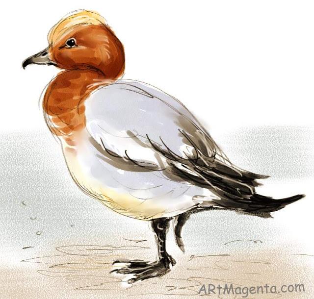 En  fågelmålning av en Bläsand från Artmagentas svenska galleri om fåglar.