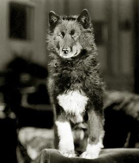 Husky origin Balto