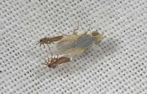 تصدق ذبابة مرسوم أجنحتها نملتين كاملتين