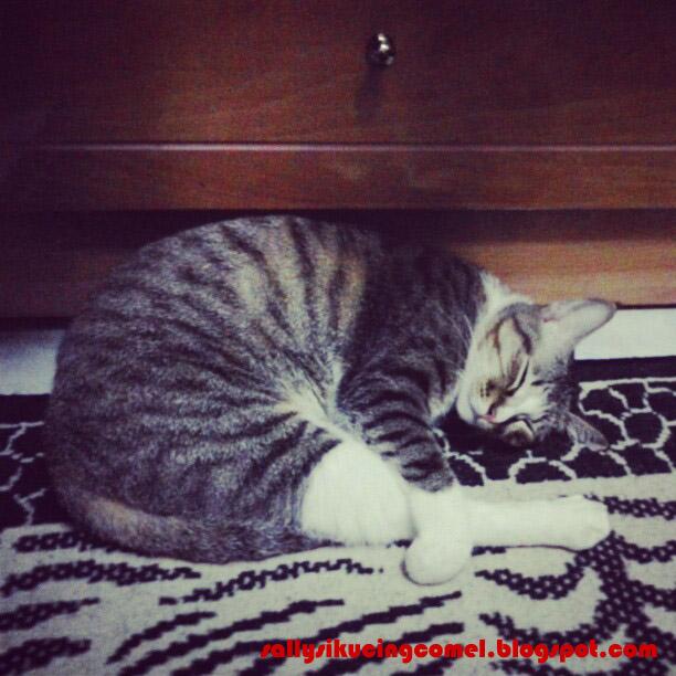 Diari Seorang Pencinta Kucing Alalaa Tomeinyaaa