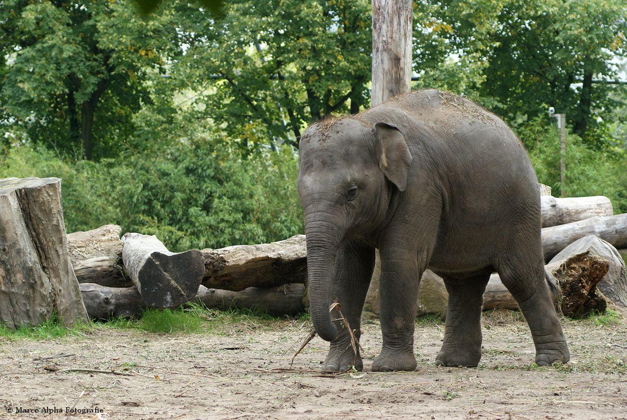 grappige olifant schilderijen