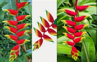 Patujú símbolo de Bolivia