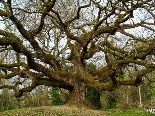 Piante erbacee vs piante arboree quali sono le differenze for Piante da frutto ornamentali