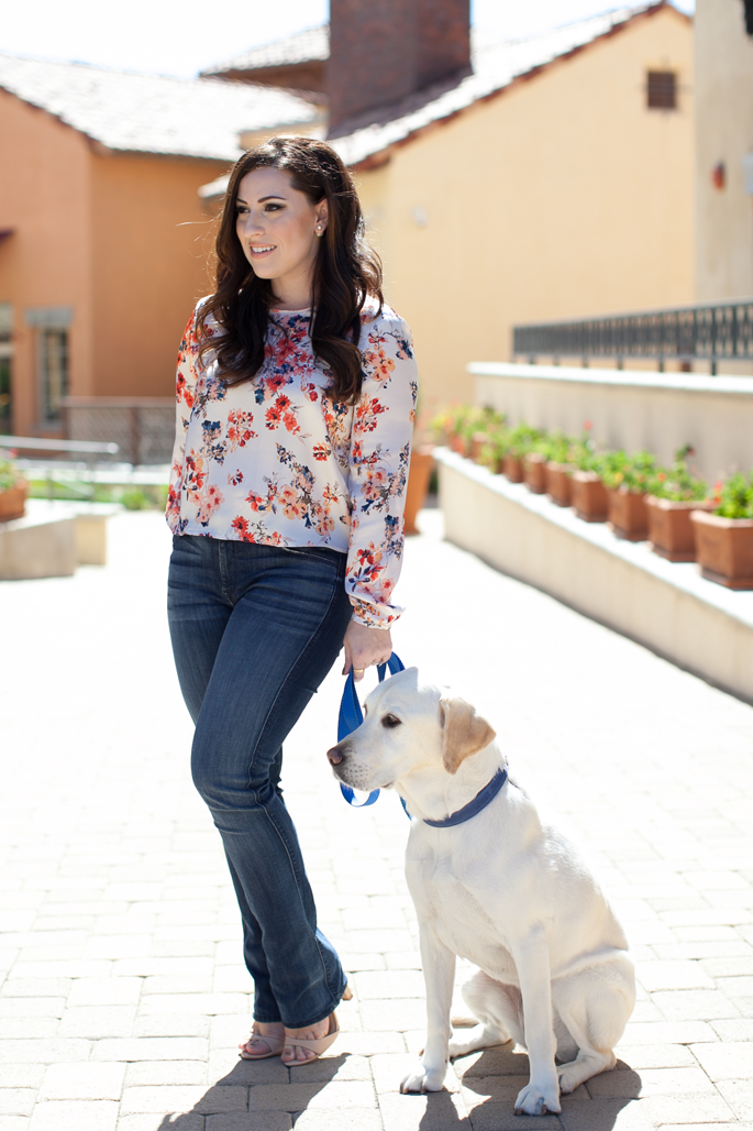 7 FAM Skinny Illusion Bootcut Denim, Floral Crop Top, Labrador Retriever