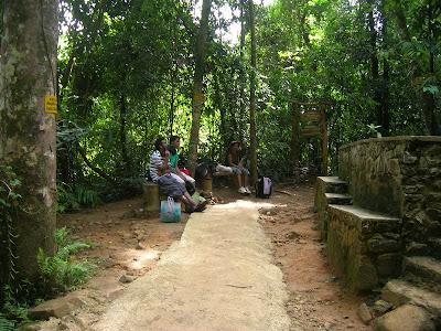 Sinharaja rain forest, waterfalls of sinharaja, Mederipitiya camping site, Forest departments, sri lankan beauty