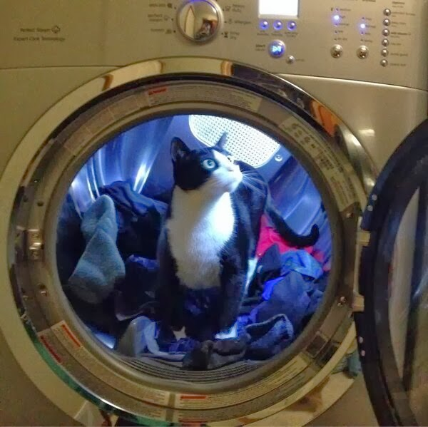 Funny cats - part 93 (40 pics + 10 gifs), cat inside washing machine