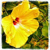 let your soul flower!!!