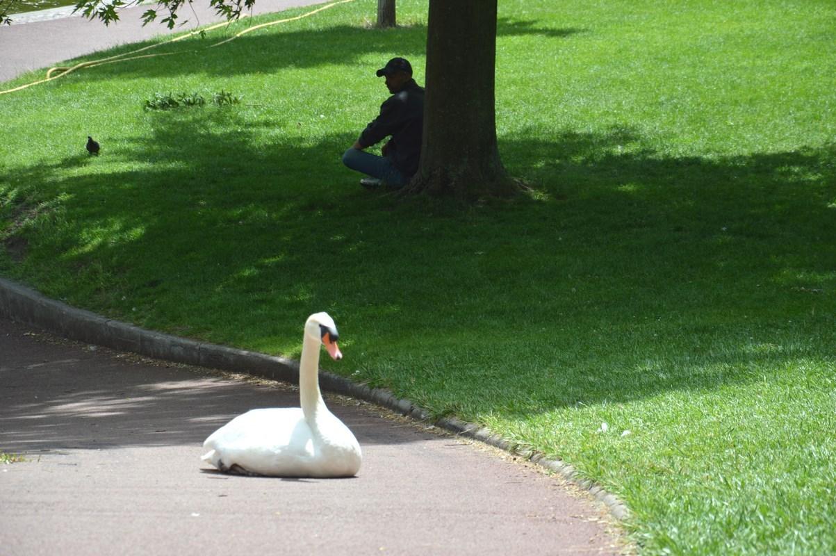 Jardin Lecoq - Le Cygne