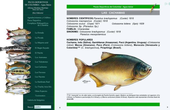 Espacio de pesca fichas especies peces deportivos de for Pez cachama