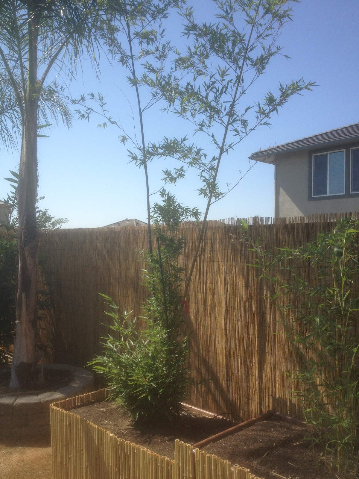 bamboo geek roseville homeowners bring tropical feel to their