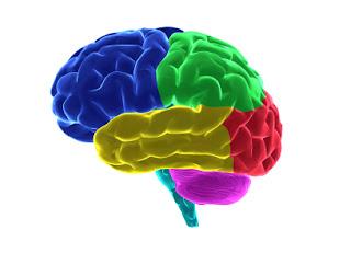 Early Childhood Brain Development from Brain Insights