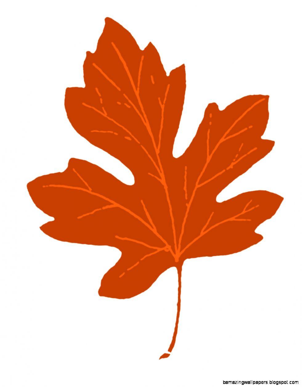 Leaf maple leaves clip art free clipart images   Clipartix
