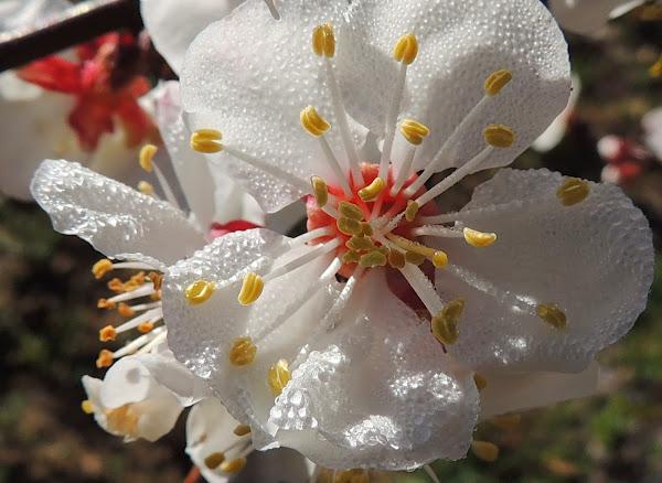 F.D: los frutales en flor, de El Terrao