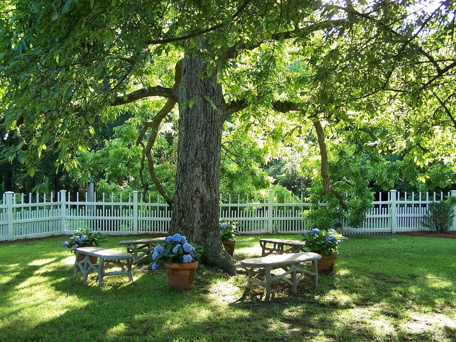 Tara dillard garden design course free in a single pic for Landscape design training