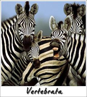 Haiwan verterbrata mempunyai tulang belakang