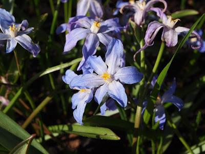 Macro - Flores del Keukenhof