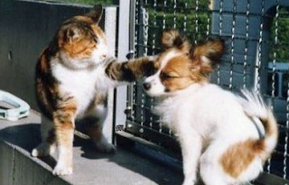 funniest picture of dog and cat fight
