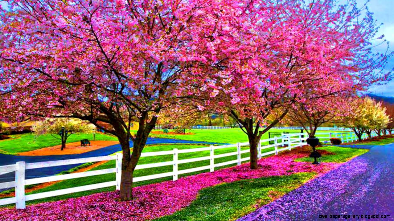 A Beautiful Spring Day Computer Wallpapers Desktop Backgrounds