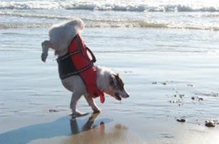 Anjing Terpandai Di Dunia