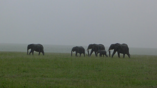 Elephants at the Masai Mara in Kenya