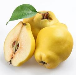 Quince  - rich in vitamins and minerals