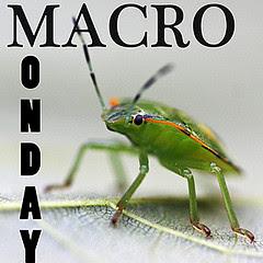 Mandag , Macro
