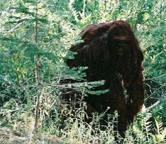 thanksgiving sequoia national park