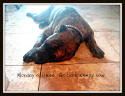 Labels: monday quotes monday meme cane corso dog meme funny dog photos
