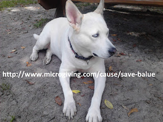 Save Balue!  http://www.microgiving.com/cause/save-balue
